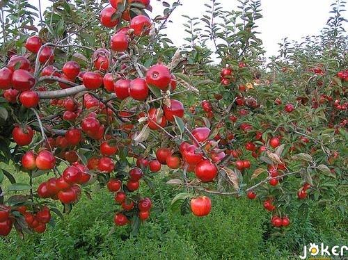اجتماع لمزارعي التفاح وجمعية المزارعين: لايجاد اسواق لتصريف الانتاج